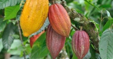 SAGO 2021: Cacao-Café du Bonheur dans la Tasse le 27 Juillet 2021 sur la CRTV